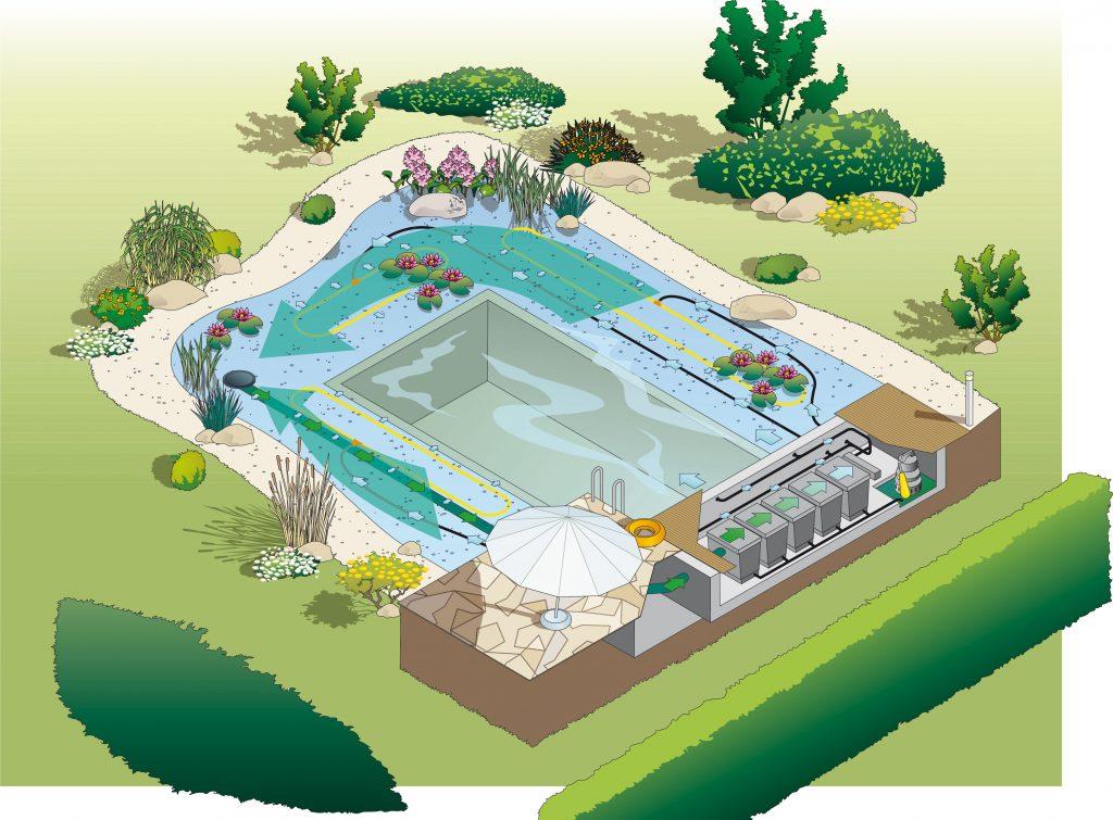 Diagram of a swim pond or natural swimming pool